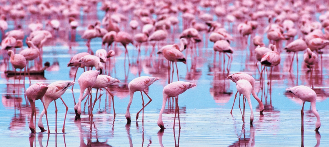 Flamingo Symbolic Meaning Whispers Channels Prophecies Visions
