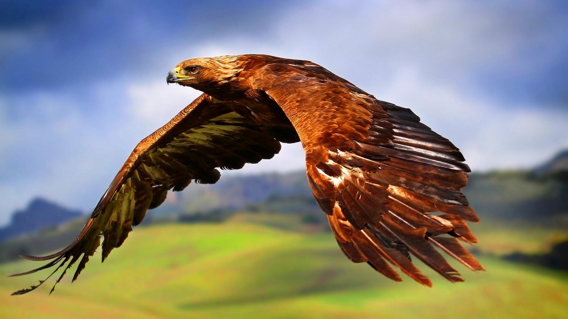Hawk Symbolism Whispers Channels Prophecies Visions