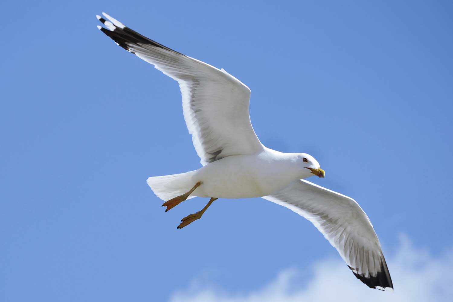 Seagull symbolism whispers channels prophecies visions altavistaventures Image collections