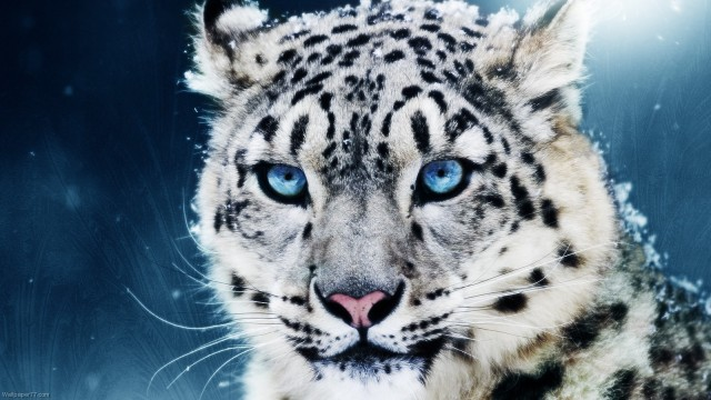 The White Leopard Symbolic Meaning Whispers Channels Prophecies