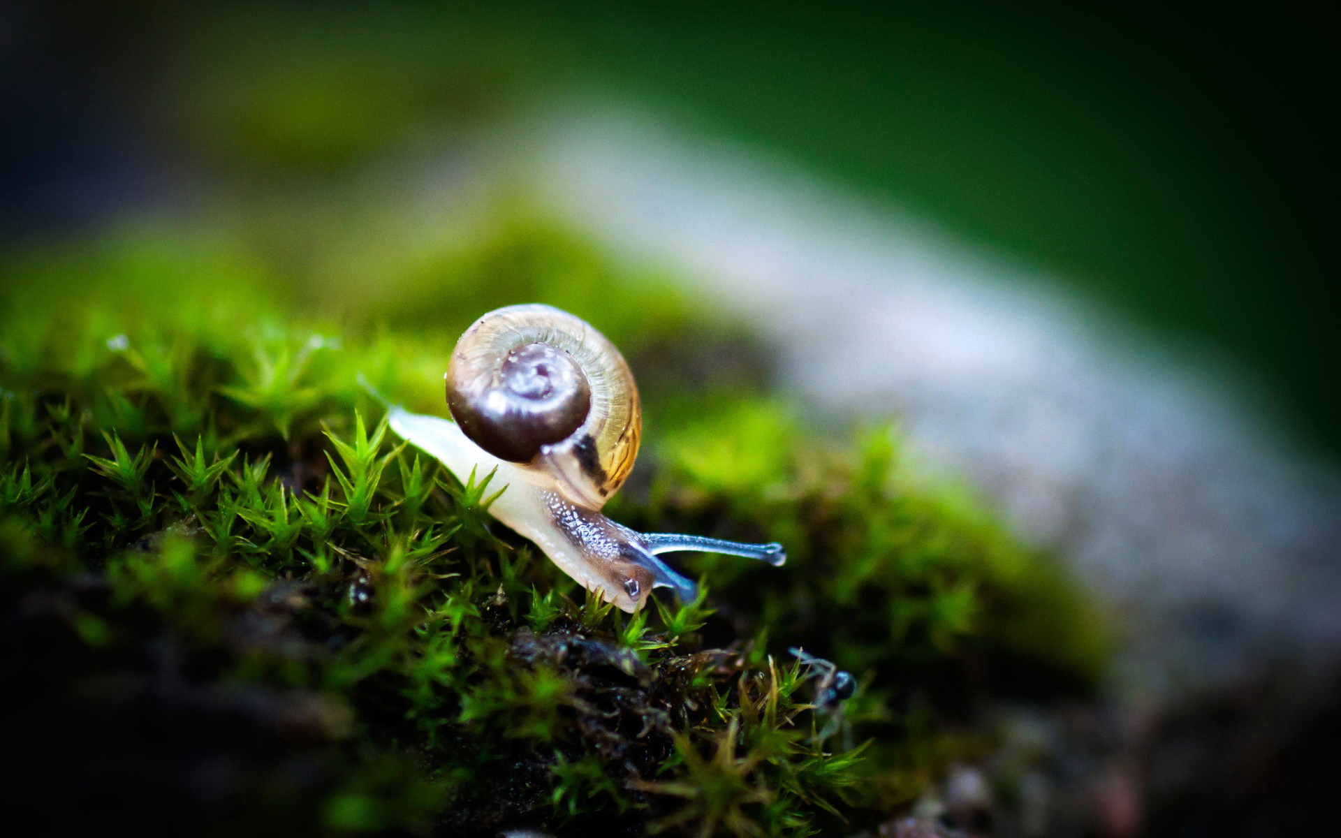 Snails Symbolic Meaning – Whispers, Channels, Prophecies & Visions