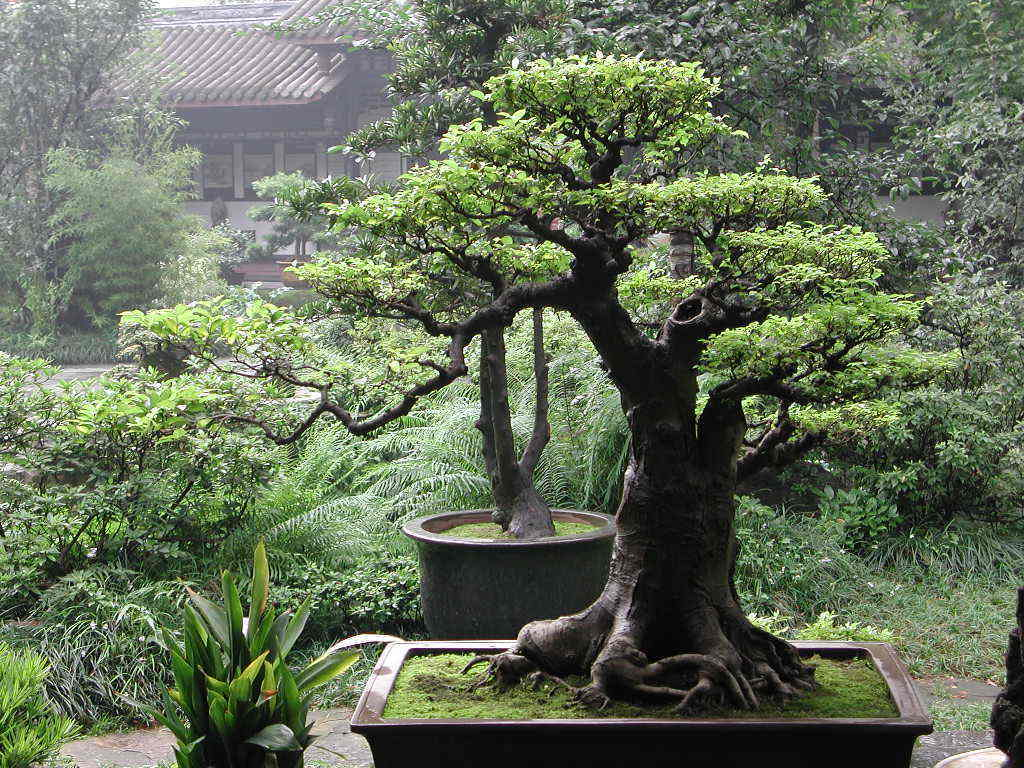 Bonsai Tree Symbolic Meaning Whispers Channels Prophecies Visions