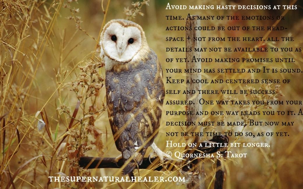 Card 1 The Owl