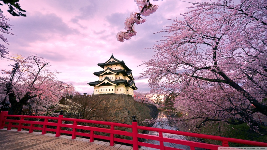 Japanese Cherry Blossom Symbolic Meaning Whispers Channels