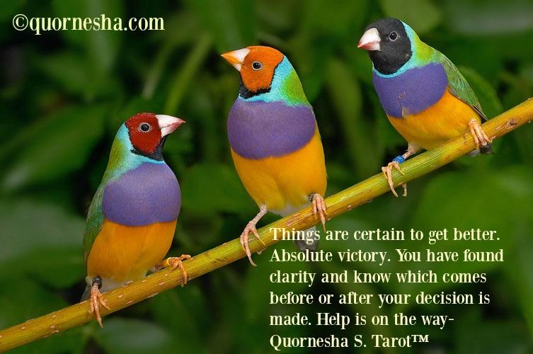 Gouldian_Finches962-quornesha.com