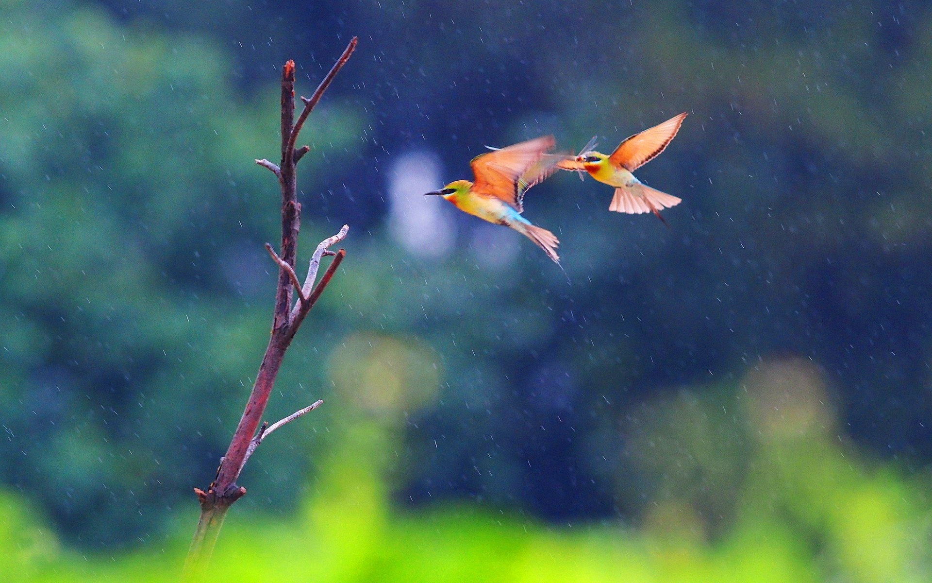 two_birds_flying_in_the_rain-wide