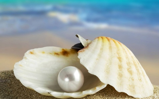 The Symbolic Meaning Of Sea Shells Whispers Channels Prophecies