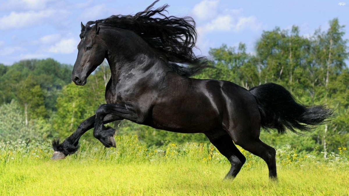 Black Stallion Symbolic Meaning Whispers Channels Prophecies