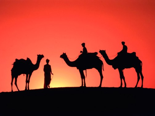 Camel-wallpapers-9