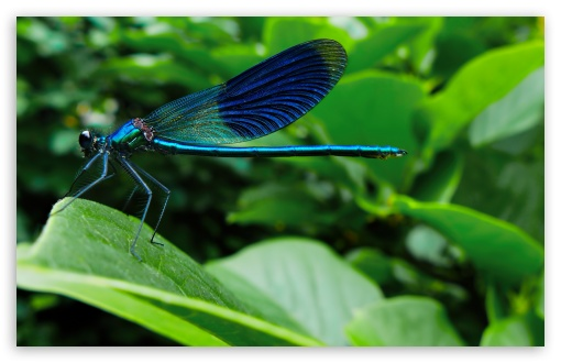 Insect Symbolic Meaning – Whispers, Channels, Prophecies & Visions