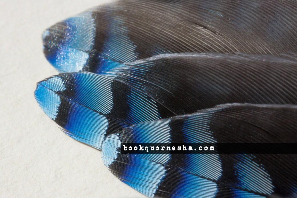 8394bookquornesha.com