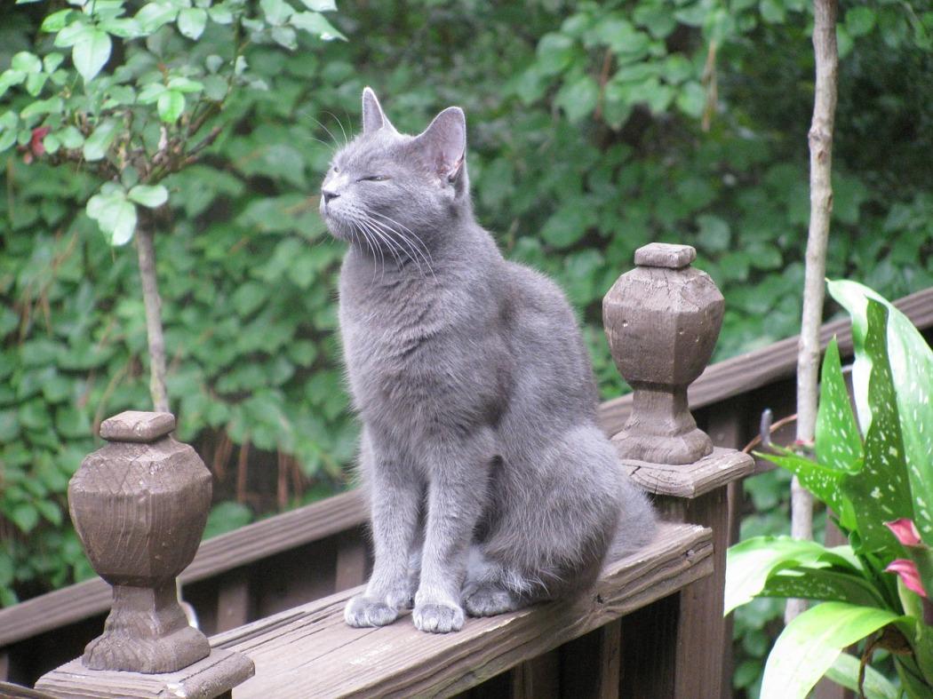 cat-762959_1280