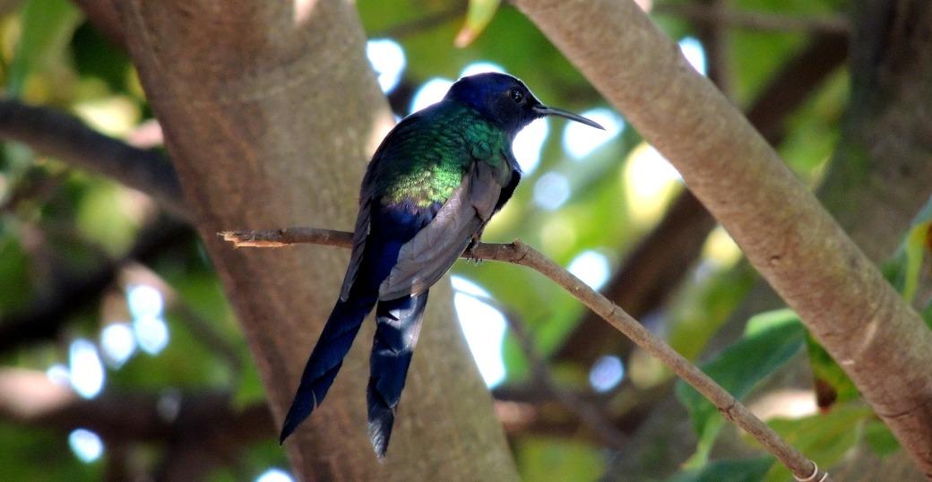 hummingbird-228777_1920