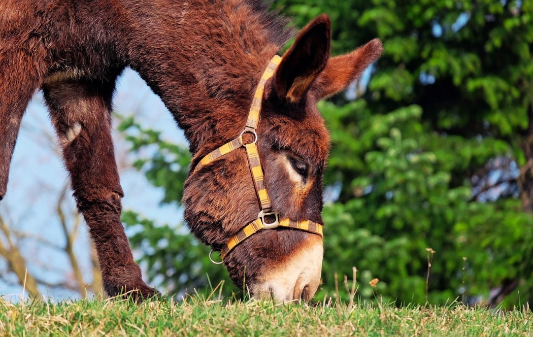 Spiritual Meaning Of Donkey Whispers Channels Prophecies Visions