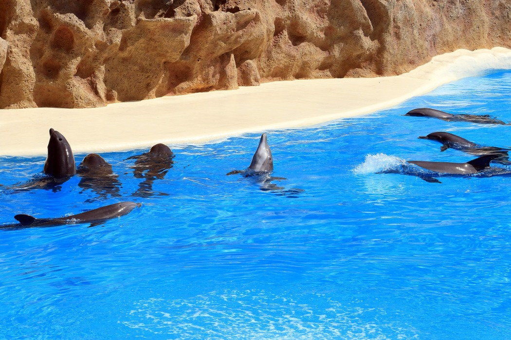 dolphins-1517227_1920