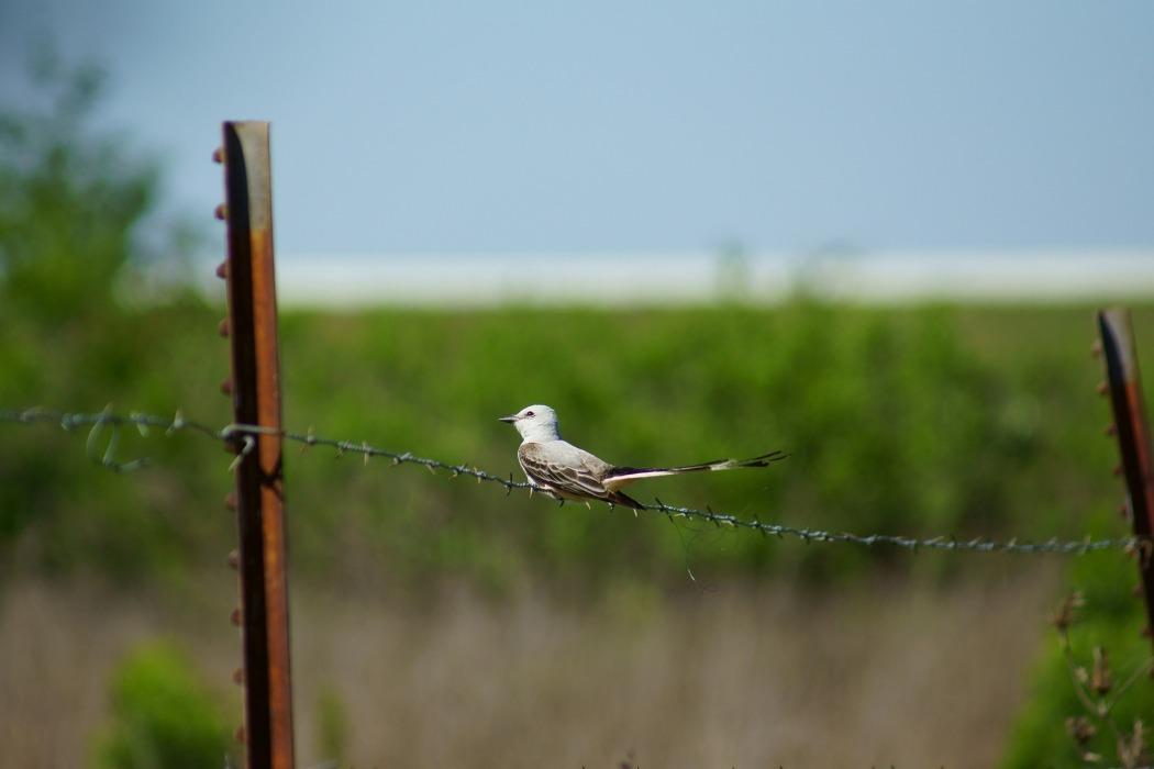bird-1282176_1920