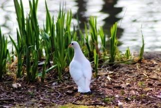 Resultado de imagen de white doves angels