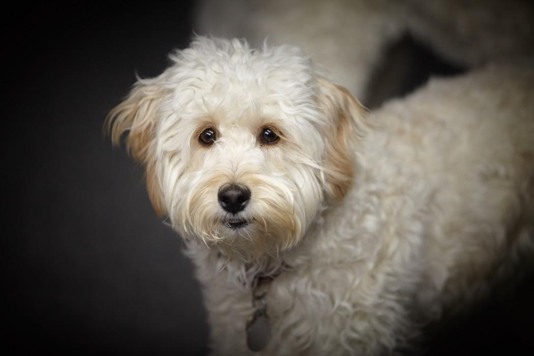puppy-1472085_1920