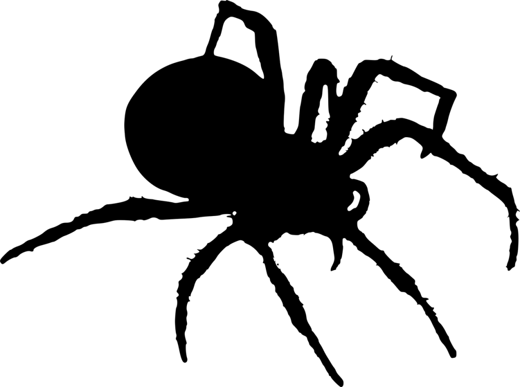 Spider Symbolic Meaning Whispers Channels Prophecies Visions